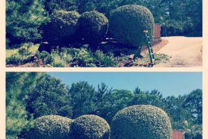 Landscaping services manteo NC 5