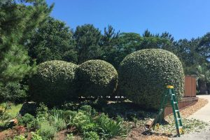 Landscaping services manteo NC 8